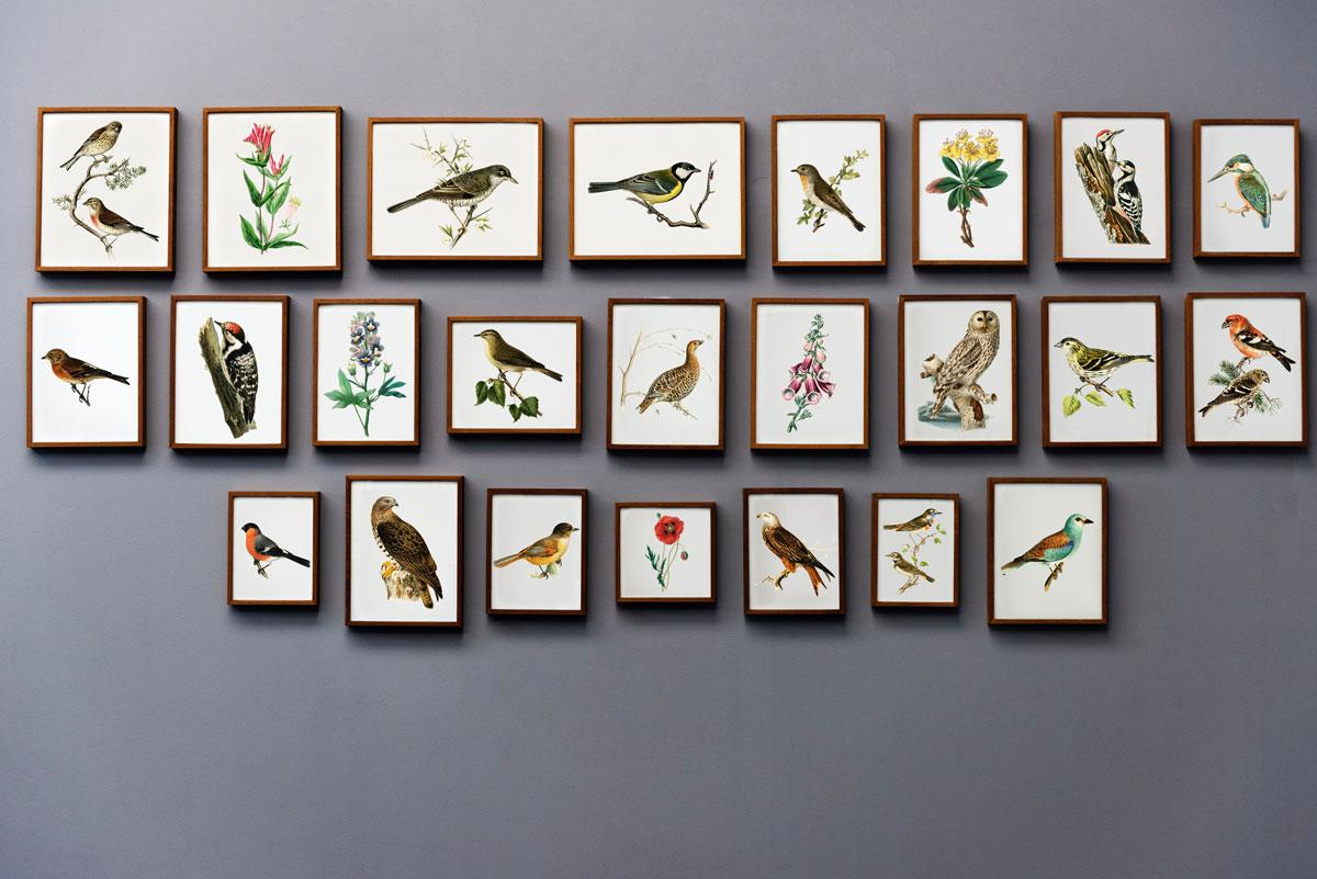 Apartment Decor photos of birds and flowers against grey wall