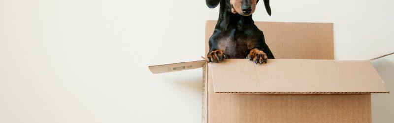 Cute dog popping it's head out of cardboard box against light colored wall